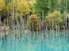 秋の美瑛選果「感謝祭」と紅葉の青い池
