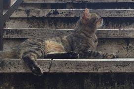 初イタリア女子1人旅5泊7日③~ローマ観光とフィレンツェ移動編~