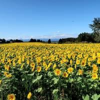 娘家族と秋の北海道3泊4日