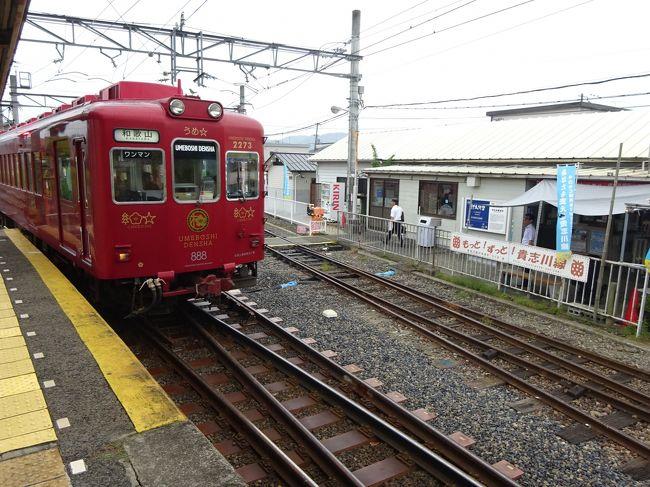 昨年夏、大阪への用事のついでに巡った大阪南部のローカル線。<br />今回、また同じ用事で大阪に出かけたので、その続きで和歌山のローカル私鉄に乗りに行っております。<br /><br />南海電鉄の支線、和歌山港線に乗り、そのあと多奈川線沿線の長閑な所を歩いて、和歌山市駅に戻ってきました。<br /><br />ここから、和歌山電鐵貴志川線に乗りに行きます。<br /><br />この路線は、もともと南海貴志川線という路線でした。<br />利用客が減ってきて、廃線の話が出てきたところで、いろいろ紆余曲折があって岡山電軌の完全子会社「和歌山電鐵」として生まれ変わりました。<br /><br />和歌山電鐵といえば「たま駅長」で有名。<br />そのほか、所属するすべての車両が特徴をもったデザインに改造されました。<br />どのダイヤにどの車両が使われているかは日替わりなのですが、これがすべてHPで公表されています。<br />そこで、できる限りいろんな車両に乗れるように、あちこちで途中下車しながら進みます。<br /><br />いろんなことがありすぎて長くなってしまったので2編に分けました。<br />本編はその〈前編〉です。<br />