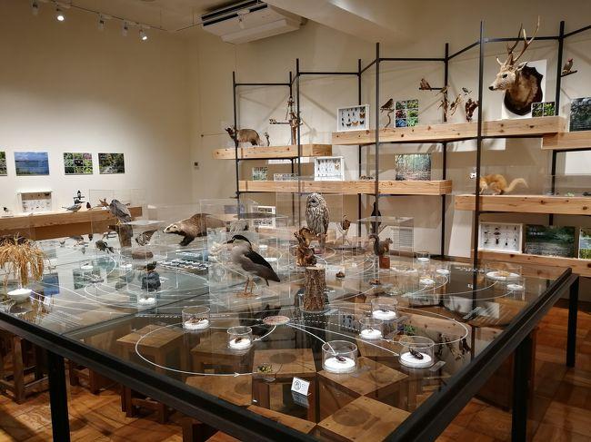 仕事で静岡に行ったついでに、科学館2つを回ってきました。<br />静岡科学館る・く・ると、<br />ふじのくに地球環境史ミュージアムです。