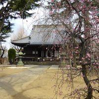 入谷〜上野 のんびり散歩 2 寛永寺、そしてアナウサギ〜動物園