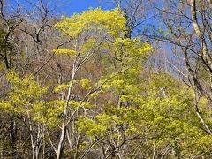 松本の奥座敷として人気の扉温泉~春の景色と一体になれる立ち湯、自慢の客室と料理~(松本)