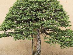 昭和記念公園-7 国営盆栽苑 名品盆栽61鉢も ☆日本の伝統/芸術文化の粋・時間の凝縮