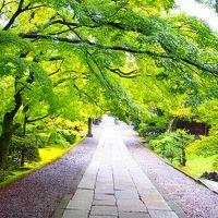 京都のゲストハウスと祇園の居酒屋遊亀、三十三間堂と2019の紅葉チェックに鯖寿司二つ。