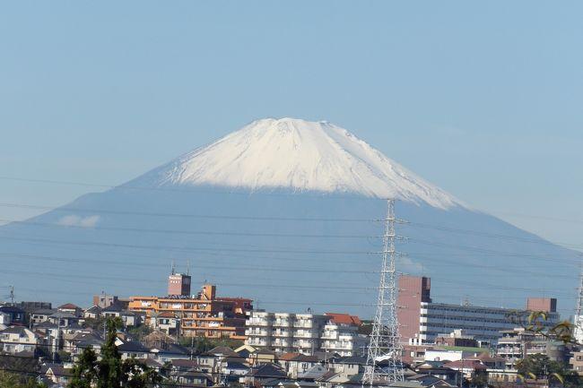 昨日(即位の礼の日)の夕方の気象情報では立山、駒ケ岳、富士山の初冠雪が観測されたと伝えていた。今朝は台風19号の台風一過以来の秋晴れの晴天で、これならば富士山もクッキリと見えるだろうと富士山のビュースポットに出掛けてみた。<br /> 明治学院大の正門と南門との中間にある紅葉(もみじ)滝の富士山のビュースポットはこの駐車場のフェンスが更新され、目が狭くなってカメラでの撮影が難しくなってしまっている。その1段低い道路からは何とか富士山を撮影することができた。<br /> また、倉田小と八幡谷公園の間からも富士山が見える。ここが富士山のビュースポットであることは今日初めて知った。以降は紅葉滝ではなく、ここが私にとっての富士山のビュースポットとなる。<br /> 10日前にこの秋初めての富士山の姿を撮った実方塚参道脇の道路予定地からも富士山(https://4travel.jp/travelogue/11554006)が望める。たった10日で初冠雪した富士山は山頂が少し白くなっている程度ではなく、8合目くらいまではすっかりと雪を被り、白くなっている。もはや冬場の富士山の姿だ。<br /> なお、今年の富士山の雪も昨年と同様に南側(静岡側)が少なく見える。やはり、静岡側の富士山の地表温度は雪を解かすほど高いのであろうか。<br />(表紙写真は初冠雪した富士山)