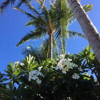 ハワイ (ハワイ島/Big Island) バケーション 2017 Day10