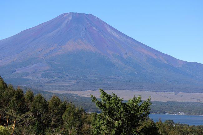台風19号で被災された皆様に謹んでお見舞い申し上げます。<br />一日も早い復旧がなされますことをお祈り申し上げます。<br />そんな中の旅行記です。。。<br />10月の連休。夫婦で<br />自宅から自家用車で富士五湖と箱根を旅する予定を立てておりました<br />10/11(金) の夜から静岡、富士山の麓に入り、<br />10/12(土) 時計回りで五湖周辺を観光<br />富士浅間神社巡り等。宿泊はエクシブ山中湖<br />10/13(日) は箱根で宿泊をとっていたので(小涌谷に)<br />箱根観光を楽しみに(私ははじめてなので)<br />10/14(月・祝) 残りの観光から帰宅する。という計画でした<br />ところが<br />台風19号の予想経路が丁度そのあたりへ<br />悩んだ末、取り合えず<br />山中湖へ行ってしまおうと。。。<br />【前半記】<br />10/11 夜出発で高速道路を走ります<br />浜中湖あたりで雨が・・<br />途中何度かSAで休憩し、<br />10/12 3時には御殿場インターを下り「道の駅すばしり」で仮眠<br />雨風もきつくなってきたし、冠水したら?と<br />宿泊予定のエクシブ山中湖へ連絡し行くことに<br />こころよく、しかも朝の9時にチェックイン頂けました。<br />1日中ホテル滞在は初めて。<br />ランチは中華、ティタイムはケーキ、夜はフレンチを頂き、<br />窓の外は暴風雨。お部屋は2人では勿体ない位広いので、<br />ゆっくりくつろぐことが出来ました.<br />10/13 朝から快晴です。<br />富士山が雲もなく素晴らしい姿を見せてくれました。<br />(今年は初冠雪が22日も遅く、結局10/22に雪化粧だったみたい・<br />富士山の初冠雪とは、麓から雪が見えることだそうです。)<br />7,8,9月しか見ることが出来ない、雪のない富士山が綺麗に見れました。<br />そして・・・山中湖、河口湖西湖、精新湖、本栖湖と回ることが出来ました。<br />13日の宿泊は箱根の予定でしたが<br />雨量が多かったため国道1号線が閉鎖、宿に連絡した所<br />キャンセル料はいらないとのことで、キャンセルしました。<br /><br /><br />