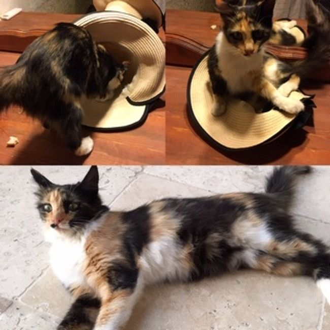 カッパドキアの洞窟ホテルでは人懐こい猫ちゃんがいっぱいいます<br />猫好きにはたまらない<br />帽子を置いたら早速チェックして、その後すっぽり入って寝てしまいました<br />
