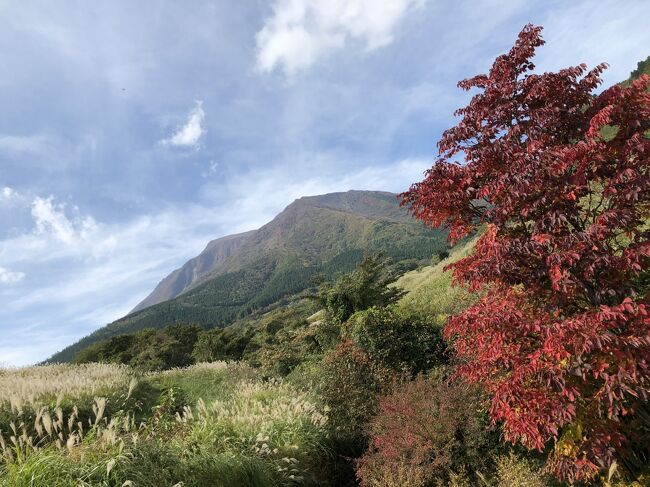 2019年10月27日(日)第一観光の日帰りバスツアーで、「コスモスとサルビアのくじゅう花公園と池山水源とレゾネイトクラブくじゅう素敵な高原ランチバイキング」9480円に参加しました。秋晴れの空の下、紅葉の始まった九重連山を見て、美味しいランチバイキングを頂き、温泉入浴し、サルビアやマリーゴールドが咲き乱れるくじゅう花公園を散策し、池山水源で澄み切ったきれいなお水を見て来ました。美味しい物を食べ、温泉にも入り、美しい物を見て、命の洗濯ができた1日でした。その旅行記です。