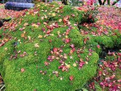 定番スポットを巡る京都・紅葉の旅 ③   (永観堂)