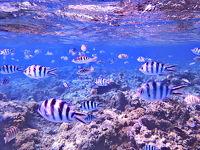 BoraBora, Tahiti - 煌めく青の楽園 - Vol.3
