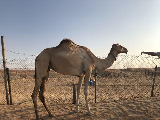 11月は3連休+有給1日でドバイ、アブダビ、オマーンの飛び地ディバの3都市を駆け巡ってきました(^^)<br />ラグジュアリーなイメージのドバイですが、私らしく、砂漠でキャンプ、オマーンの秘境でクルーズと、アラブの大自然を大満喫してきました。<br />ドバイ・アブダビ編です。<br /><br />★10/31(木)   仙台→ 成田→ドバイ<br />★11/1(金) ブルジュハリファ→ラメールビーチ→砂漠でキャンプ<br />★11/2 (土)  アブダビへ日帰りトリップ→ドバイへ戻りスーク巡り<br />11/3(日) オマーンの飛び地ディバでクルーズツアー <br />11/4(月)    ドバイ→成田→仙台