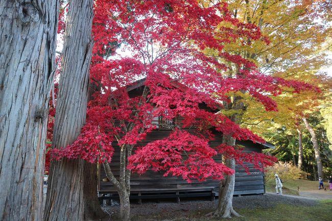 11月の最初の三連休に函館に2泊3日のショートトリップ。<br />美しい紅葉と、現地のグルメをお友達と楽しみました!<br />