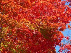 札幌の紅葉(2)