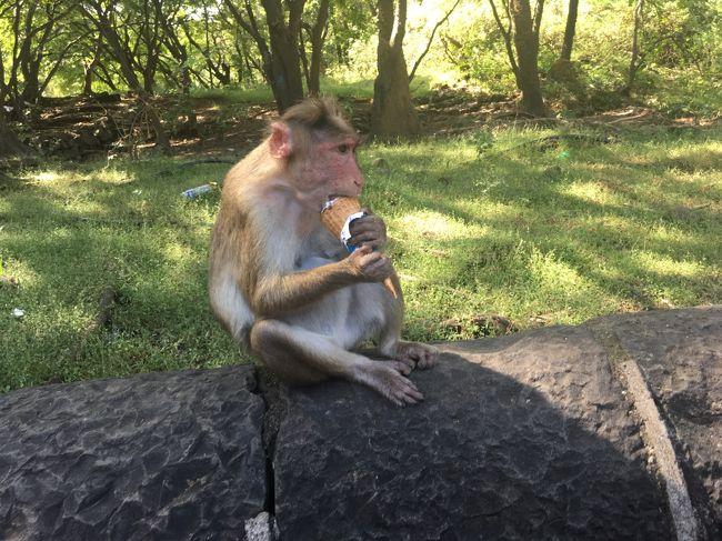 ムンバイからフェリーでエレファンタ島へ行き石窟寺院を観光しました。遺跡に興味がなくても、猿や牛などの動物を見て楽しむことができます。