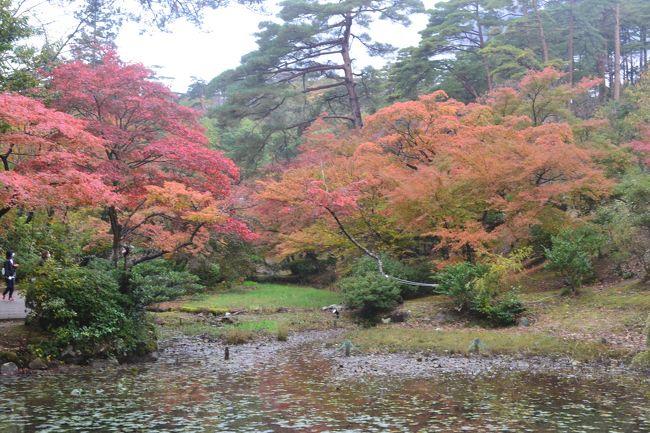 11月5日~6日に越後の紅葉の名所として知られる、柏崎の松雲山荘、弥彦のもみじ谷、越後のもみじ園に行ってきました。<br />この3か所では、地元の観光協会等が共催で、10月26日(土)~11月24日まで、夜間はライトアップして紅葉まつりを行っています。<br />もみじの紅葉具合について、最新情報をお知らせします。<br />この写真は、弥彦もみじ谷の水芭蕉園から見たの紅葉です。観月橋は、この上にあります。
