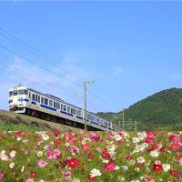 瑞風の旅前夜祭~日豊本線415系と、中津の「三光コスモス園」を訪ねて~