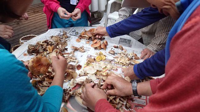 毎年、秋には野尻湖でキノコを教わっています。今年も行って来ました。