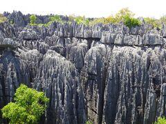 ◆マダガスカル旅◆④ベマラハ国立公園で大ツィンギートレッキング!