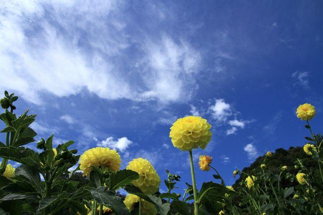 黒川ダリア園<br /><br />地元の農家で組織する黒成会が黒川ダリヤ園を開設し、運営しています。<br />390品種、1,100株のダリアを農家の方々が丹精込めて栽培しています。<br />とても見ごたえがあり綺麗です。