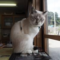 6泊7日山陰ドライブ旅[4]【島根】玉造温泉・松江城