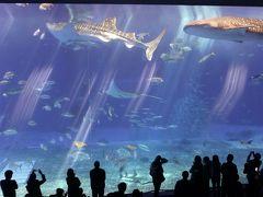 2019 早春の沖縄の旅 4 美ら海水族館と古宇利島ドライブ