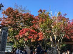 高尾山が紅葉始めました❗️🍁