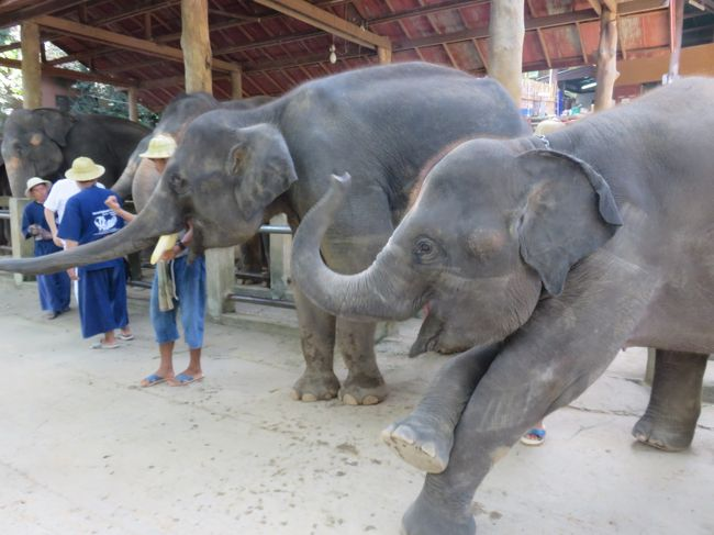 東南アジア:タイ旅行<チェンマイ・3>・・・