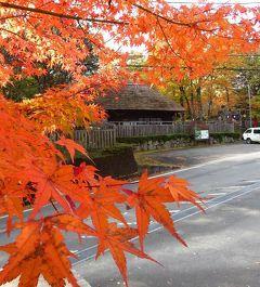 団塊夫婦の2019年日本紅葉巡りドライブー(3)帰路は湯西川温泉で紅葉を満喫