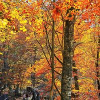 奥日光10 イタリア大使館別荘記念公園 輝く紅/黄-葉林で ☆中禅寺湖遊覧船-出航まで散歩