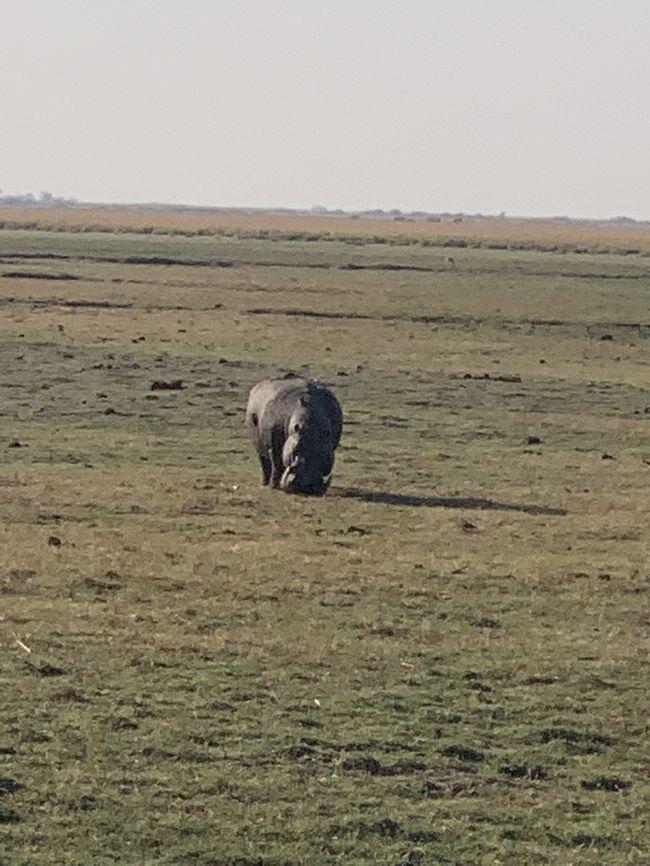 ジンバブエから陸路でボツワナ