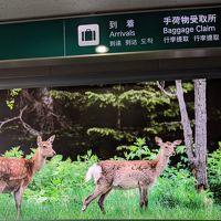 2019.10月末 鹿におびえ続けた道東ドライブ旅行�(美幌峠、川湯温泉、根室)