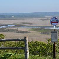 6月初旬の霧多布湿原と奔幌戸海岸ガイドツアー2019~ワタスゲの湿原と珍しい地層~(道東)