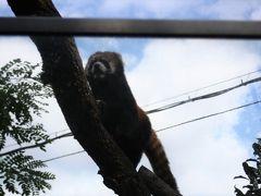 天王寺動物園でネコ科を探しながら過ごした休日