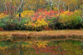 久しぶりの北海道秋旅行 (2) 紅葉と草モミジに染まった神仙沼