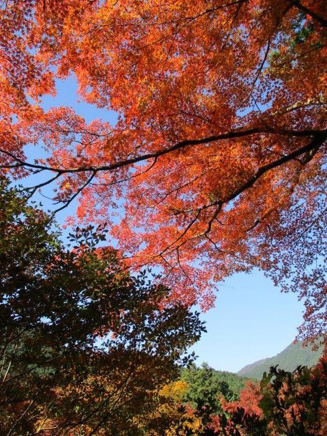 そろそろ紅葉の季節、地元ではまだちょっと早いのですが丹波あたりでは色付きも良くなってるとのことです。<br /><br />お手頃なバスツアーがあったのでちょこっと出かけてきました。