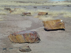アリゾナ州 ー 化石の森国立公園