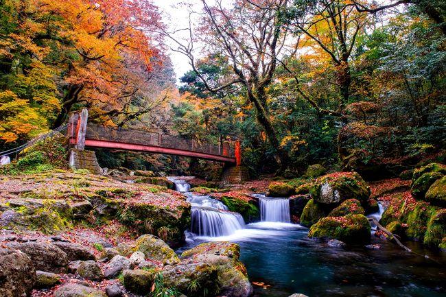 紅葉が美しい菊池渓谷へ。<br /> 菊池渓谷は、阿蘇くじゅう国立公園に属しており、阿蘇外輪山からの伏流水は日本名水百選にも選ばれています。春の瑞々しい新緑、夏の冷たい清流、秋の美しい紅葉、冬の幻想的な樹氷など四季折々に美しい景色を見せてくれます。