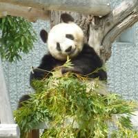 母娘旅 2013年GW in 神戸(王子動物園、北野、六甲山、キッザニア甲子園) map25