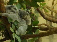 ふっくらまんまる♪コアラの赤ちゃんが可愛い@多摩動物公園