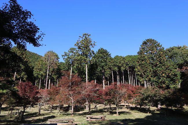 奥湯河原への紅葉狩り。まだほんの色づき始めでした。<br />池峯ハイキングコースを歩き、途中のもみじの郷などを回りながら万葉公園へ。紅葉の郷は、部分的には赤くなっている気が何本かありましたが、ほとんどは青々としていました。これがみな真っ赤になったらすごいんだろうなと思いながら、今回は紅葉狩りの下見にします。<br />ハイキングコースは1時間半ほど、高低差があり少しハードでしたが、紅葉の季節には絶好のスポットのはずです。<br /><br />JR湯河原駅 →(路線バス)→ 奥湯河原入口バス停 → 池峯ハイキングコース → 万葉公園 →<br />落合橋バス停 →(路線バス)→ JR湯河原駅<br />
