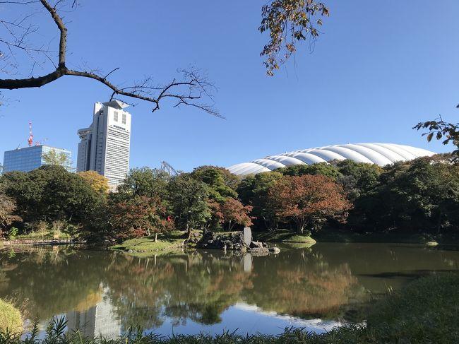 前日に後楽ガーデンホテルに宿泊、都心でランチの約束があったのでその前の時間を利用して行ってきました。<br />メジャーな観光地ではないと思っていましたが観光客、特に外人さんが多かった!<br />ボランティアガイドというものがありホームページで確認できます。<br />https://www.tokyo-park.or.jp/announcement/030/detail/22688.html<br />とってもオススメです♪