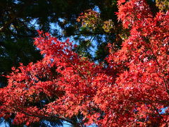 一足早く、滋賀県ぐるっと紅葉&食い倒れの旅 2
