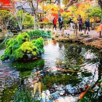 長野(軽井沢、小諸、東御、長和)で紅葉を楽しむ