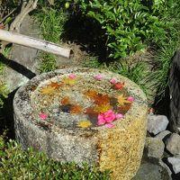 国営昭和記念公園 歩活で紅葉めぐり