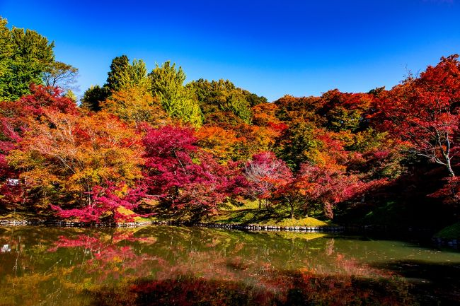 9日にはまだ早かった用作公園の紅葉、1週間を経過して見ごろを迎えていました。