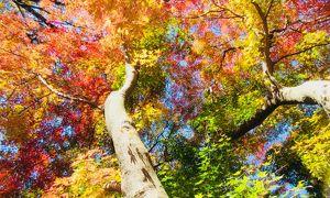 赤城自然園~森からの声~