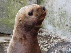 どこかにマイルで札幌☆一人旅 その5 おたる水族館