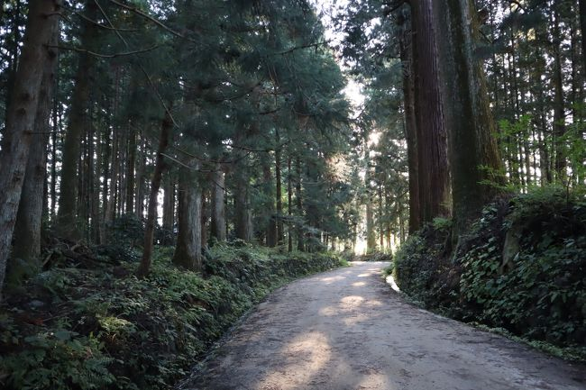 日光街道・例幣使街道・会津西街道の3つの街道に、全長37kmに渡って約12,000本もの杉の木が道の両側に鬱蒼とそびえ立つ並木道を、「日光杉並木街道」と呼んでいます。徳川家の忠臣・松平正綱が、20年余りの年月をかけて20万本以上の杉を植樹し、家康の33回忌の年に日光東照宮の参道並木として寄進しています。<br /><br />日光杉並木街道の保護と地域の文化伝承のために整備されたのが、「杉並木公園」です。旧今市市は杉線香の生産日本一を誇っており、杉線香生産の動力として水車が利用されていました。杉線香の粉挽きや米つきなどに使われた水車を設置し、昼なお暗い杉並木街道とともに、水車の廻るのどかな風景を楽しむ事が出来ます。